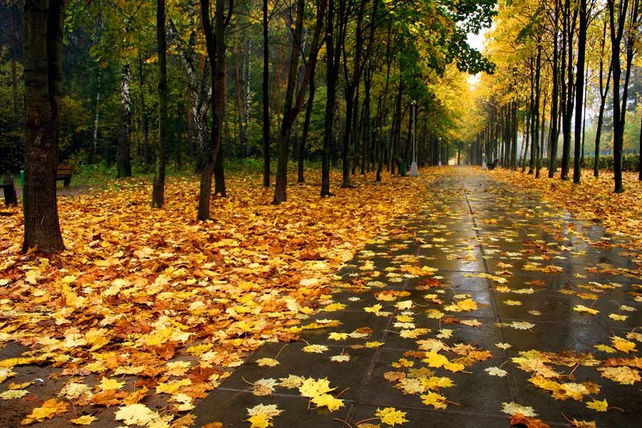 Наступает осень падает листва