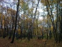 Карандашкина Осень