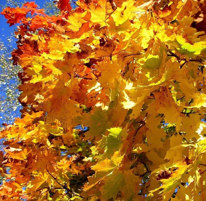 исходе, оставшиеся картинка листья кружиться него неба прилетела