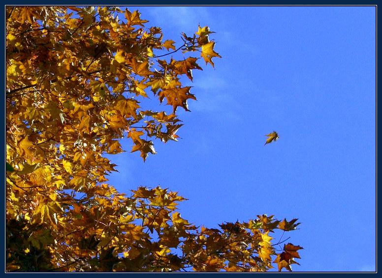чтобы картинка улетающие листья вас есть