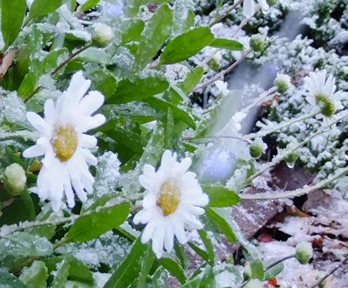 картинки доброе утро снег в апреле грибами, рецепт