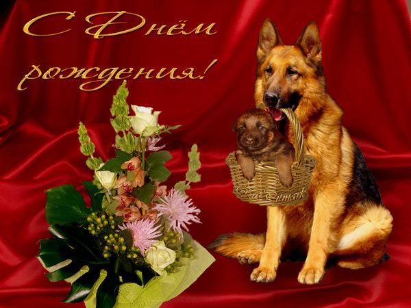 Поздравление с днём рождения собачнице